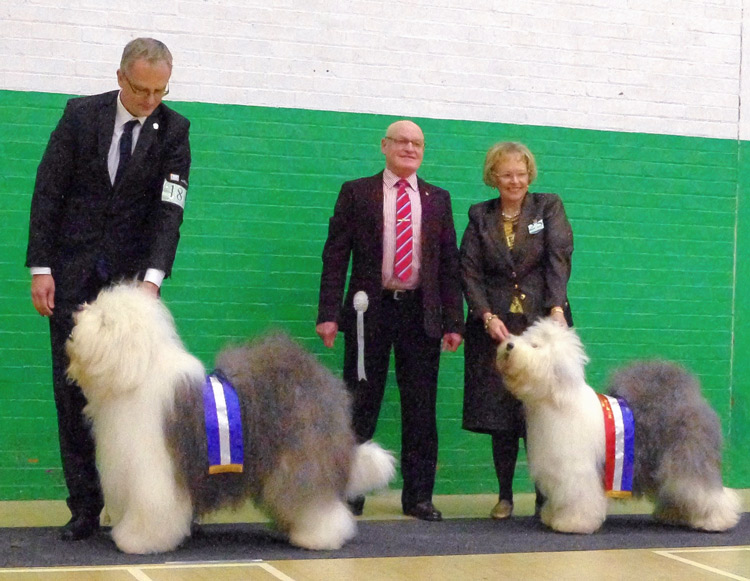 Championship show NEOES Club (North East Old English Sheepdog club), Seaham, UK, 9.2.2014, Najlepší pes – CC, BOS